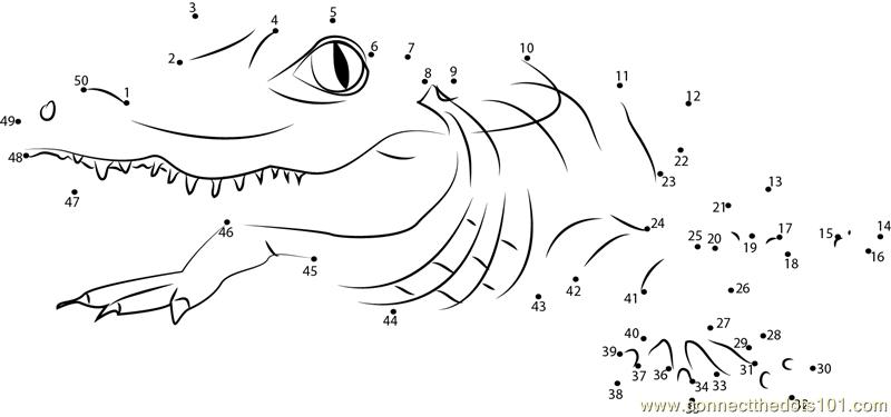 Alligator Dot To Dot Printable Worksheet