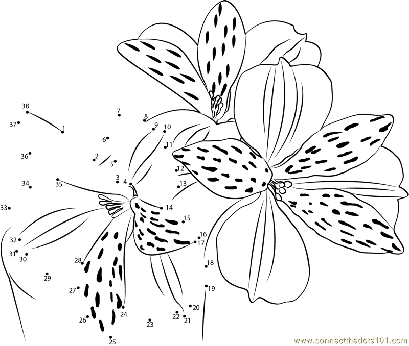 alstroemeria coloring pages - photo#1