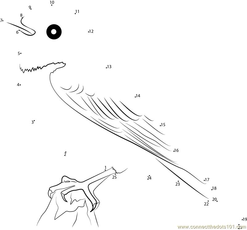American Robin Leucistic Bird Dot To Dot Printable