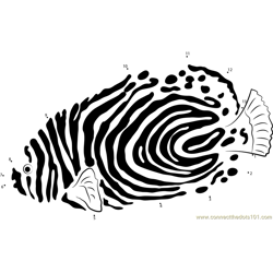 Emperor Angelfish down see