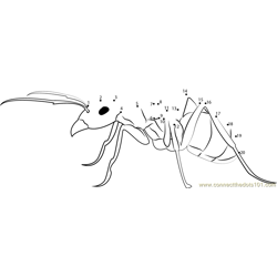 Ant Pest Control Dot to Dot Worksheet