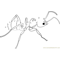 Argentine Ant Dot to Dot Worksheet