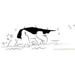 Southern Anteater Dot to Dot Worksheet