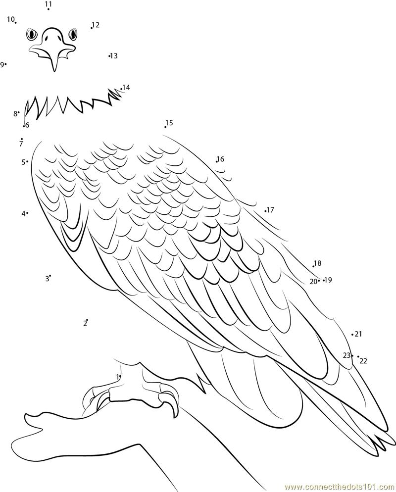 Bald Eagle Printout- EnchantedLearning.com