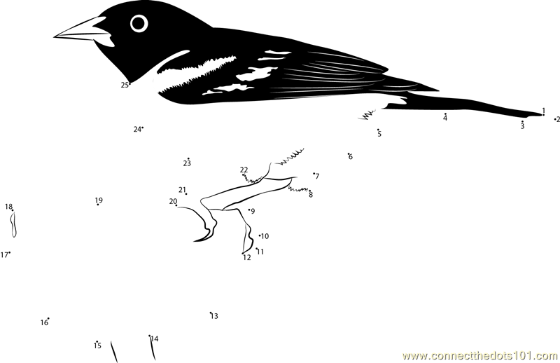 red winged blackbird coloring pages - photo#15