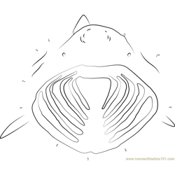 Basking Shark Open his Mouth