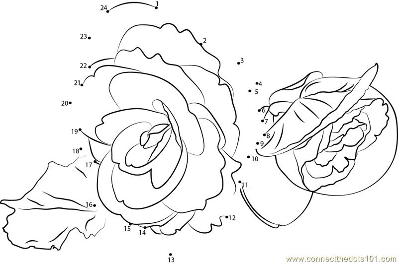 Begonia Flower Dot To Dot Printable Worksheet