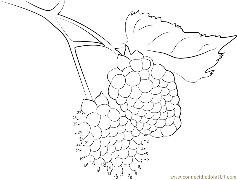 coloring pages blackberries - photo#16