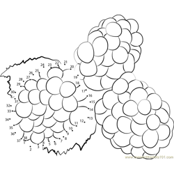 Colorful Blackberry Fruits Dot to Dot Worksheet
