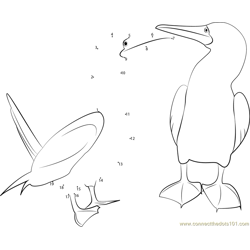 Blue Footed Booby Dance Dot to Dot Worksheet