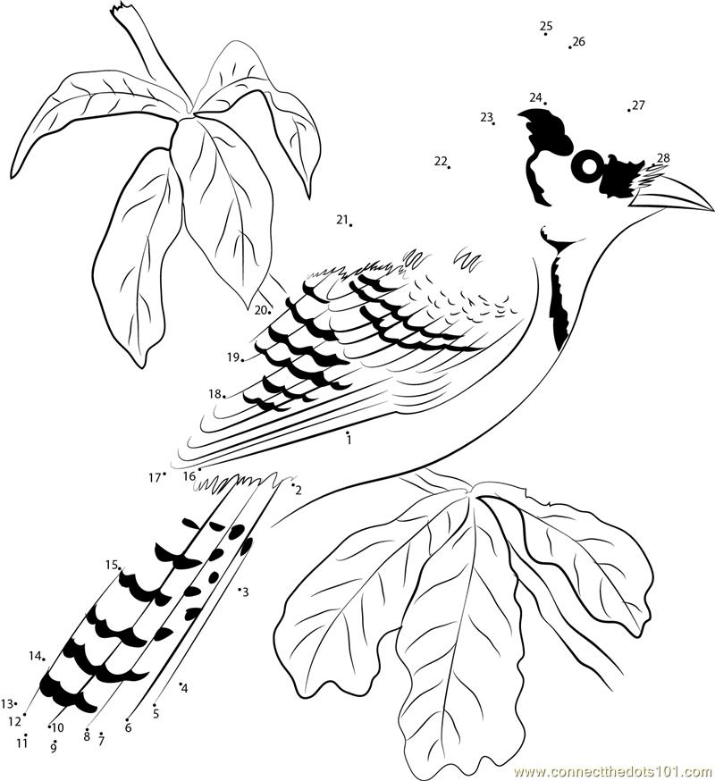 Blue Jay North America Bird dot to dot printable worksheet ...