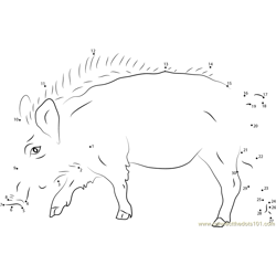 European Wild Boar Dot to Dot Worksheet