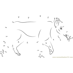 Male Boar Dot to Dot Worksheet