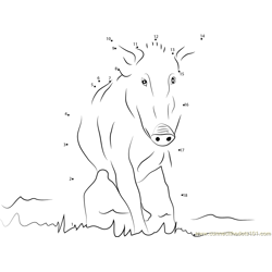 Wild Boar Dot to Dot Worksheet