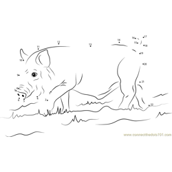 Young Wild Boar Dot to Dot Worksheet