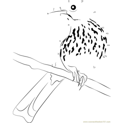 Brown Thrasher Adult Male Dot to Dot Worksheet