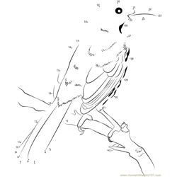 Brown Thrasher on Branch Back View Dot to Dot Worksheet