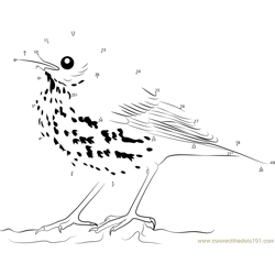 Close Look of Brown Thrasher Dot to Dot Worksheet