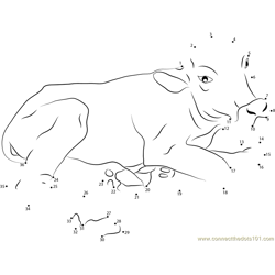 Baby Buffalo Dot to Dot Worksheet