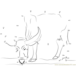 Water Buffalo Dot to Dot Worksheet