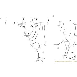 Standing Bull Dot to Dot Worksheet