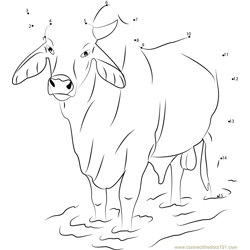 Gray Zebu Bull Dot to Dot Worksheet