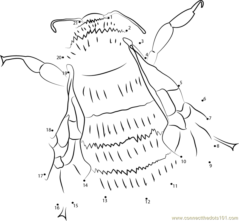 Busyspider likewise Strong Bumble Bee Connect Dots additionally  also Chukar furthermore Copy Of Amelia Earhart Worksheet X. on fly worksheet