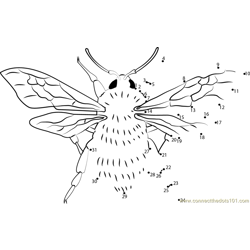 Bombus Proteus Bumble Dot to Dot Worksheet