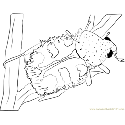 Bumble Bee Beetle Dot to Dot Worksheet