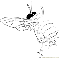 Fly Bumble Bee Dot to Dot Worksheet