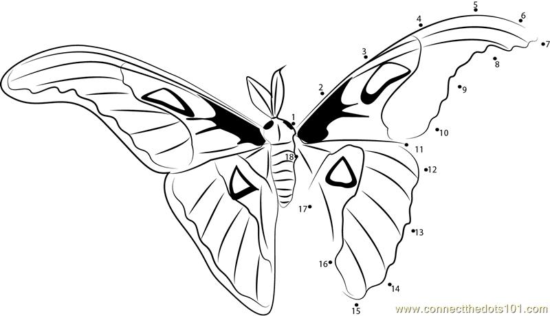 Atlasfalter Butterfly Dot To Dot Printable Worksheet