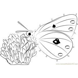 Colias Hyale Butterfly Dot to Dot Worksheet