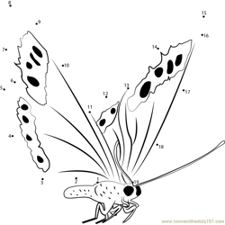 Fly Butterfly Dot to Dot Worksheet
