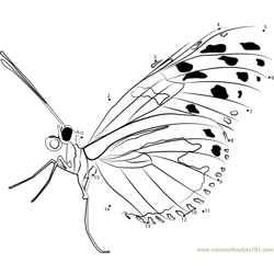 Insects Butterfly Dot to Dot Worksheet
