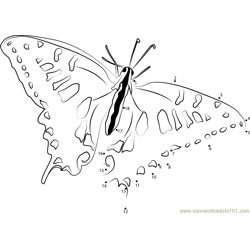 Swallowtail Butterfly Dot to Dot Worksheet