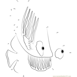 Happy Butterflyfish