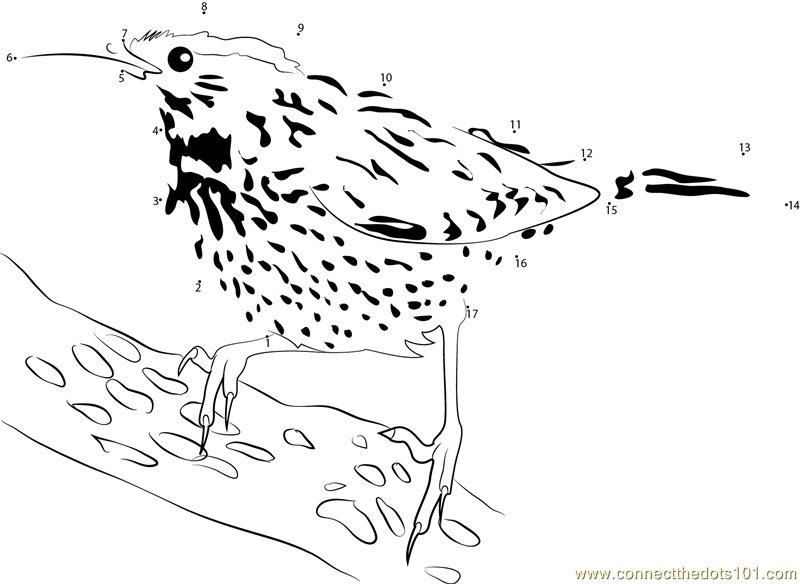 Cactus Wren Pictures dot to dot printable worksheet ...