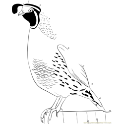 State Bird of California