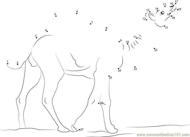 Wild Camel Dot To Dot Printable Worksheet