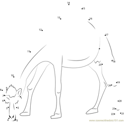 Oman Camel Dot to Dot Worksheet