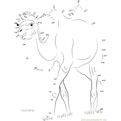 Two Humps Camel Dot to Dot Worksheet