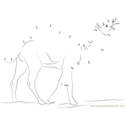 Wild Camel Dot to Dot Worksheet