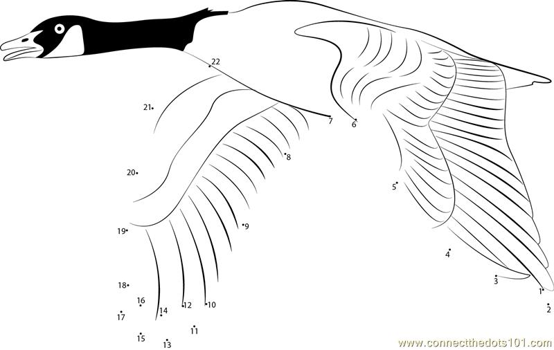 Canada Goose Fly dot to dot printable