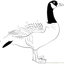 The Majestic Canada Goose