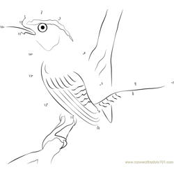 Little Carolina Wren Dot to Dot Worksheet