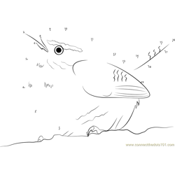 White Browed Wren Dot to Dot Worksheet