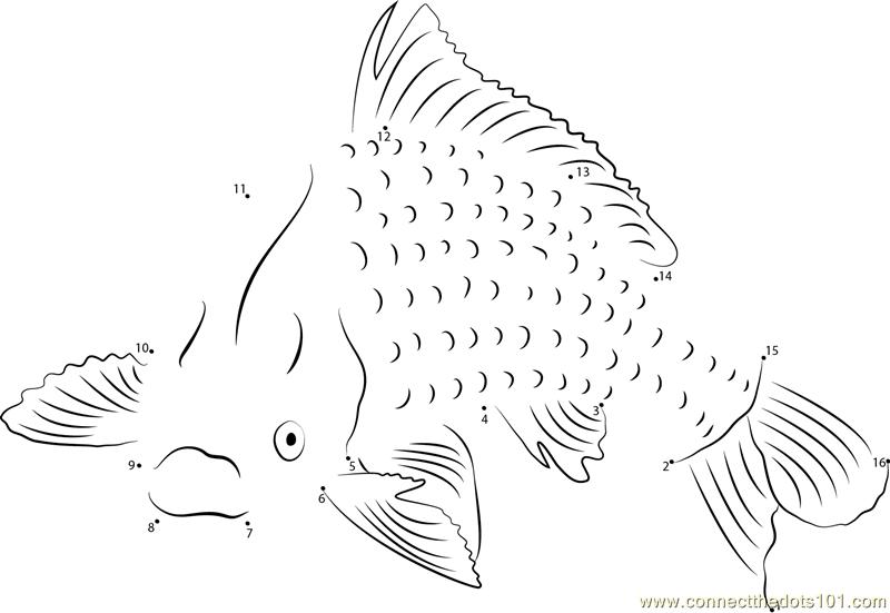 Common Carp Fish Dot To Dot Printable Worksheet
