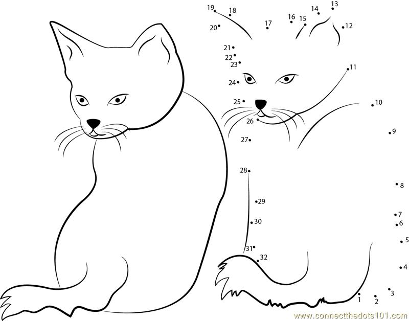 cat behavior meaning