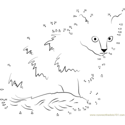 Turkish Van kitten Dot to Dot Worksheet