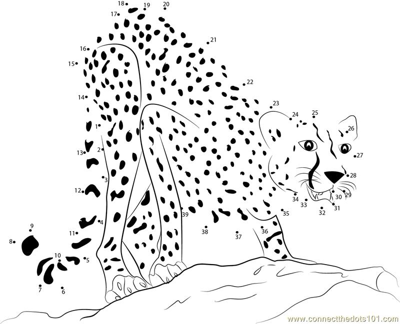 Adult Cheetah dot to dot printable worksheet - Connect The Dots